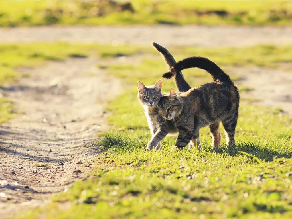 chat qui se font un câlin