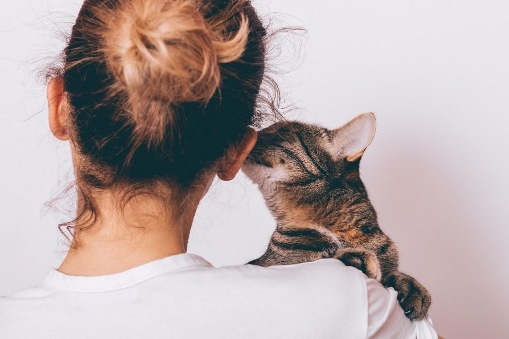 chat qui sent l'oreille