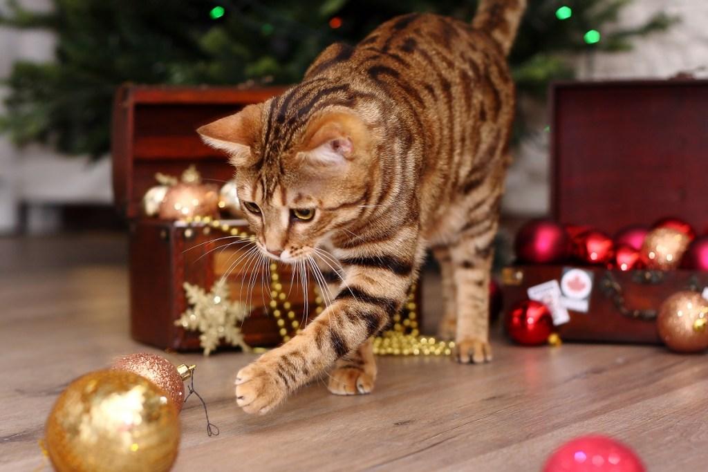 chat qui joue avec des boules de Noël