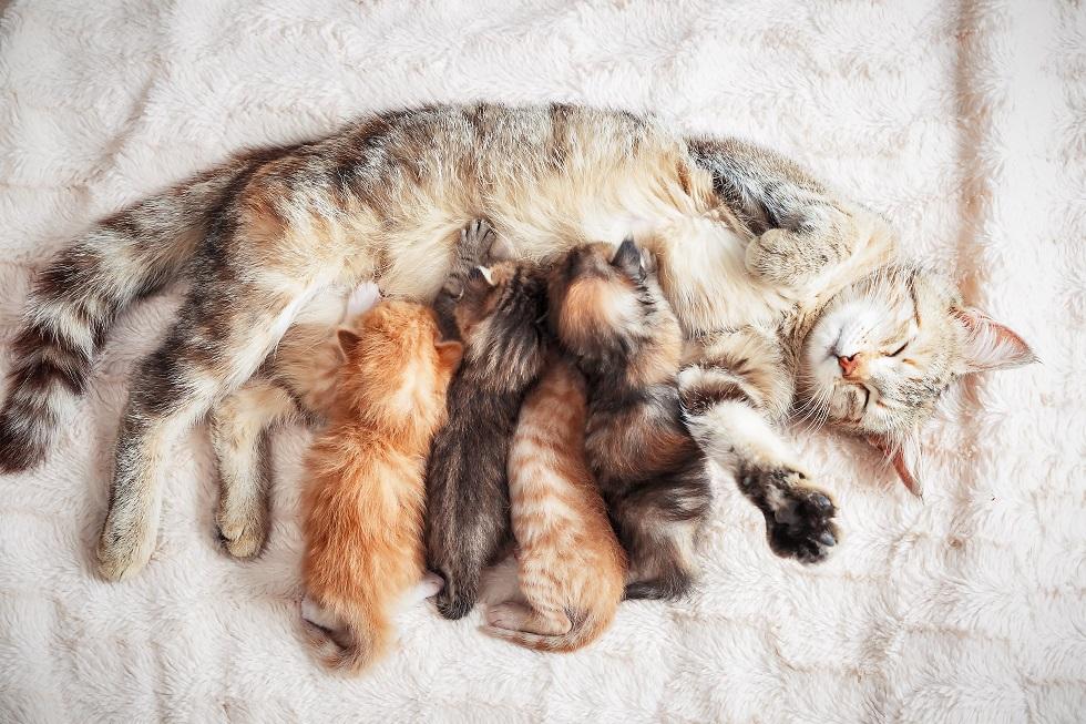 chatons en train de téter