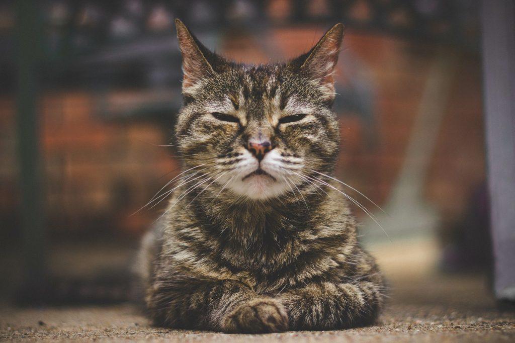chat senior yeux mi-clos