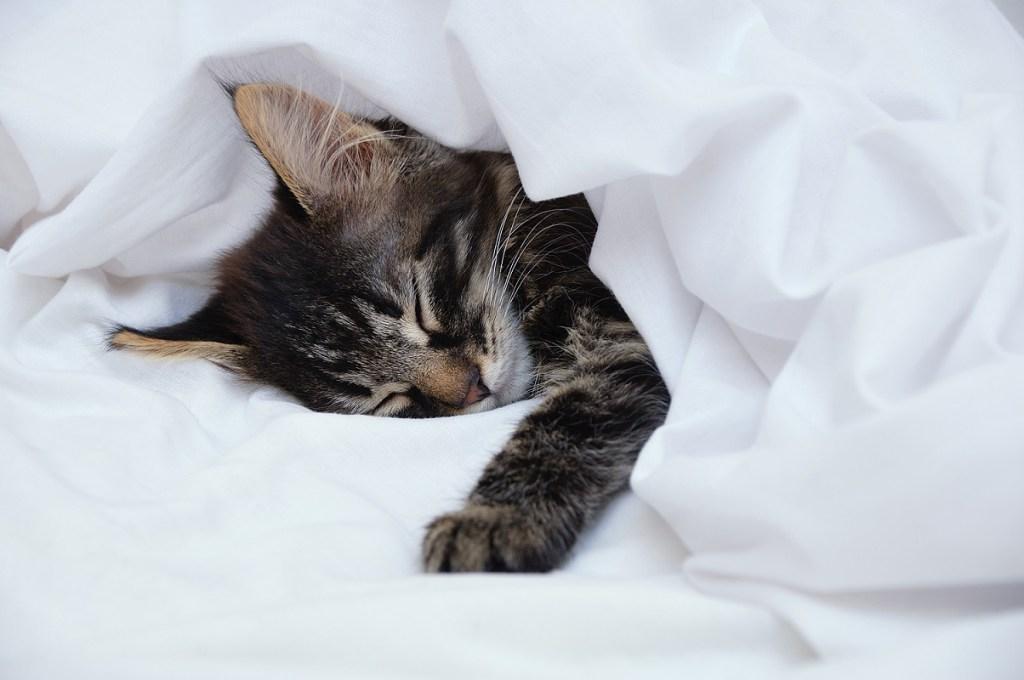 chaton qui dort
