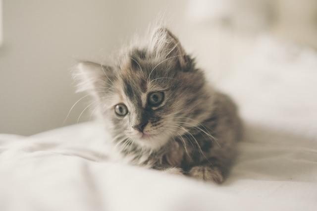 jeune chaton joueur