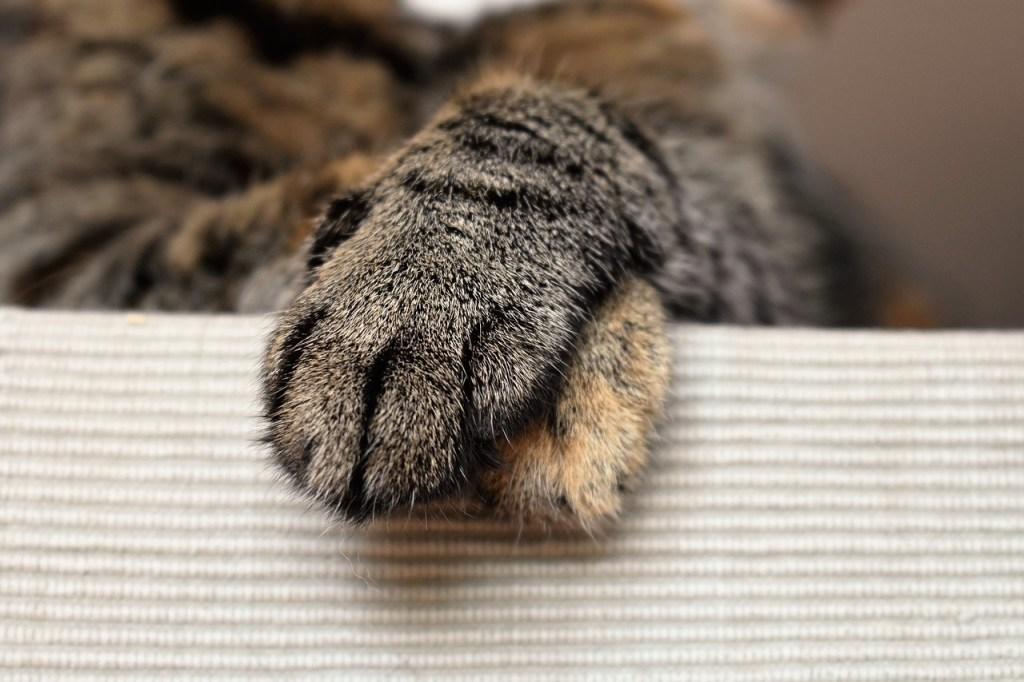 pattes de chat croisées