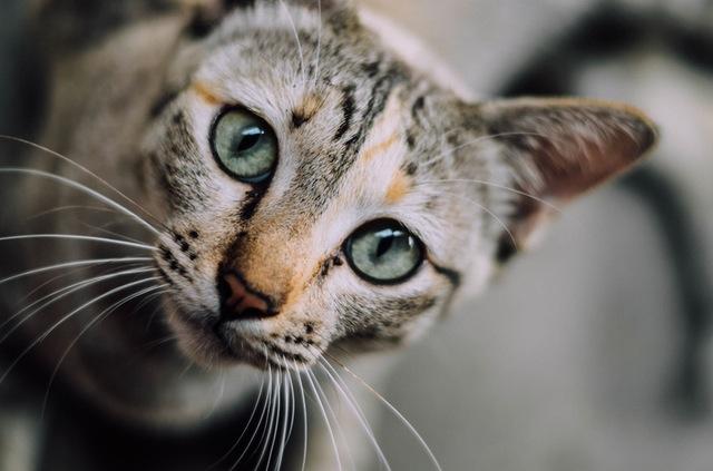 chat de près