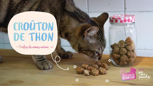 vignette DIY crouton thon pour chat