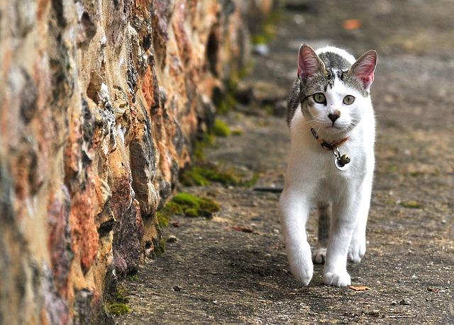 chat avec une médaille