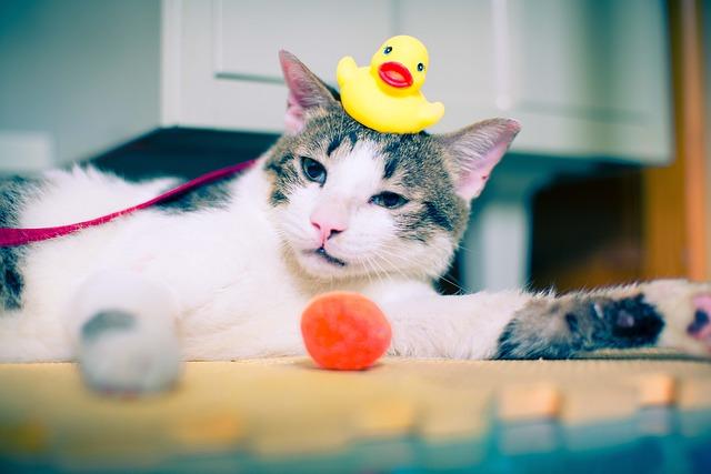 chat et ses jouets