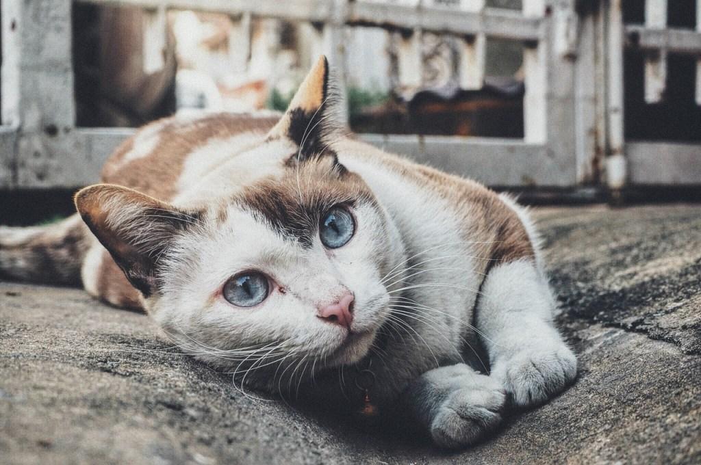 chat allongé dehors