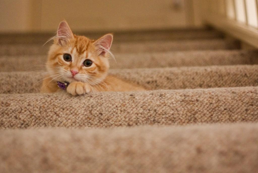 chat dans les escaliers