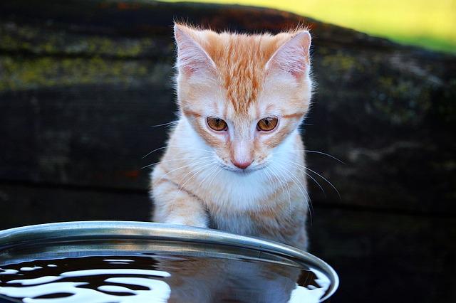 chat devant un seau d'eau