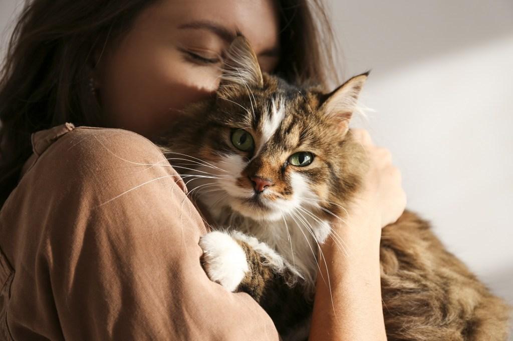 calin chat femme