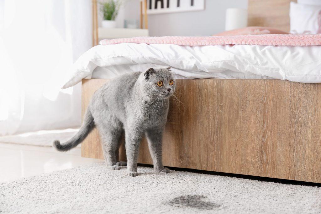 chat qui a marqué