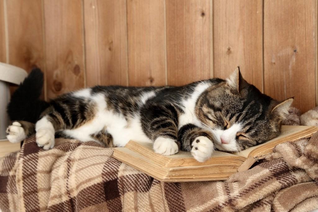 chat qui dort sur un livre