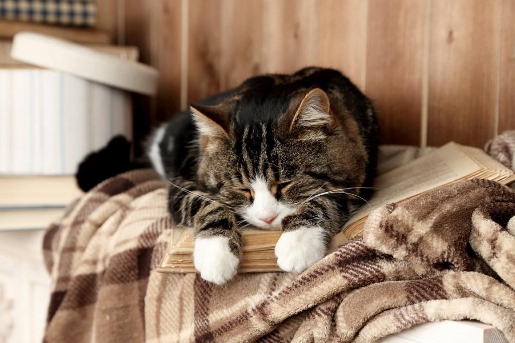 chat qui dort sur un livre ouvert