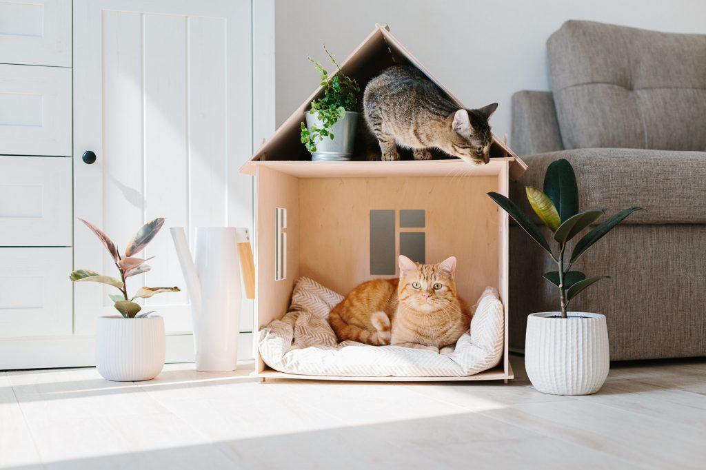 deux chats dans une maison en bois