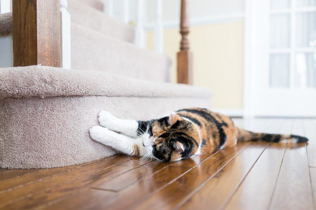 griffures de chat sur le mobilier