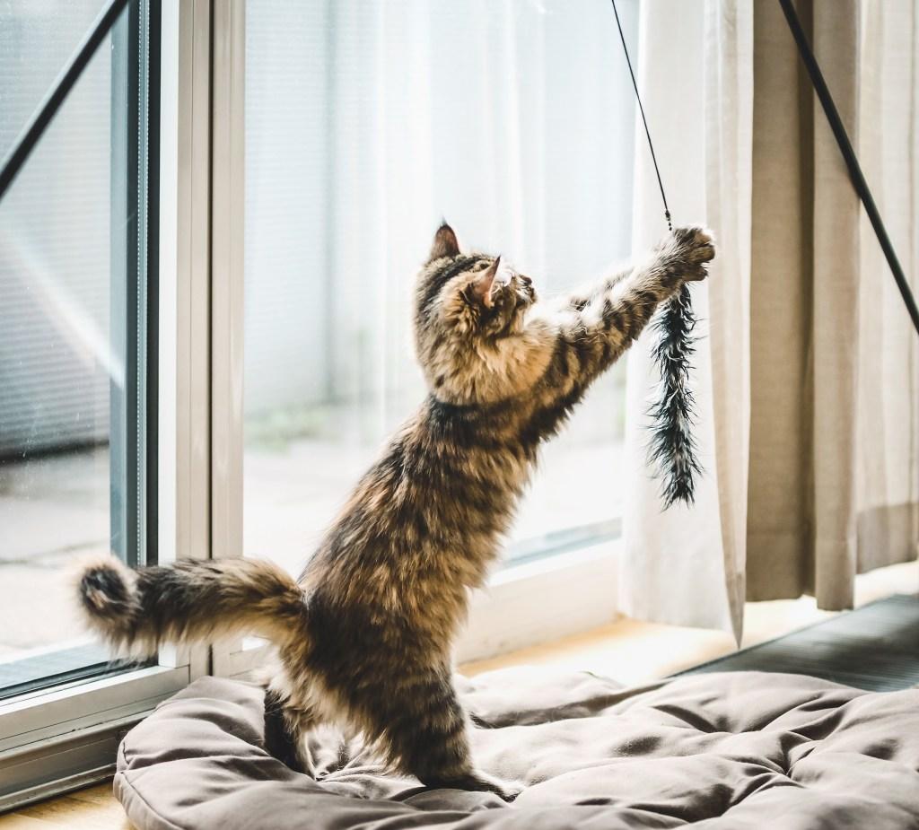 chat en train de jouer