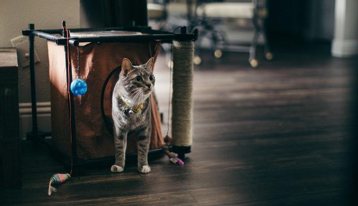 chat avec ses jouets et son couchage