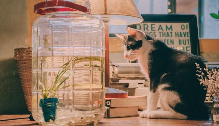 chat qui regarde un aquarium