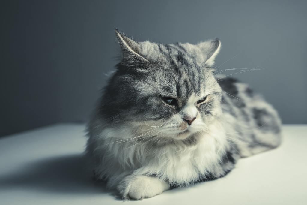 chat mécontent