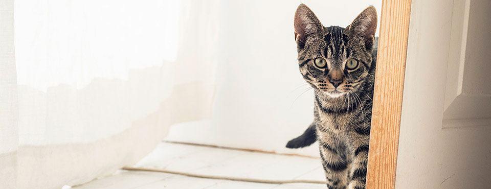 chat derrière une porte