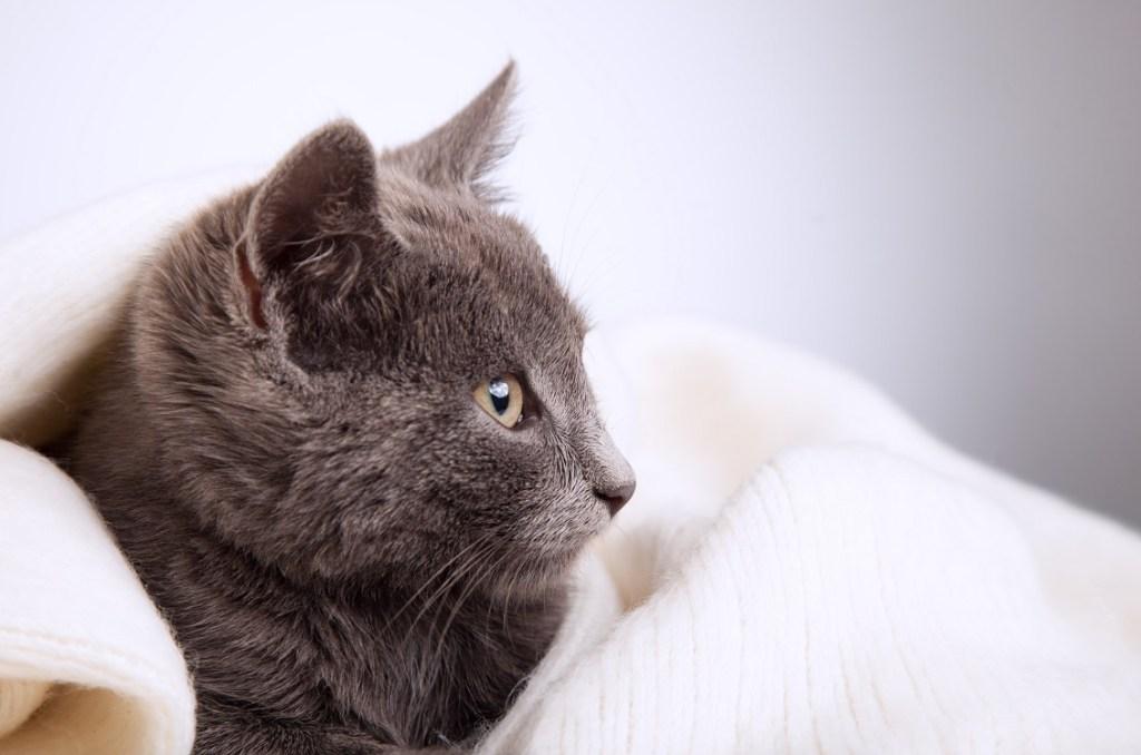 jeune chat couché confortablement