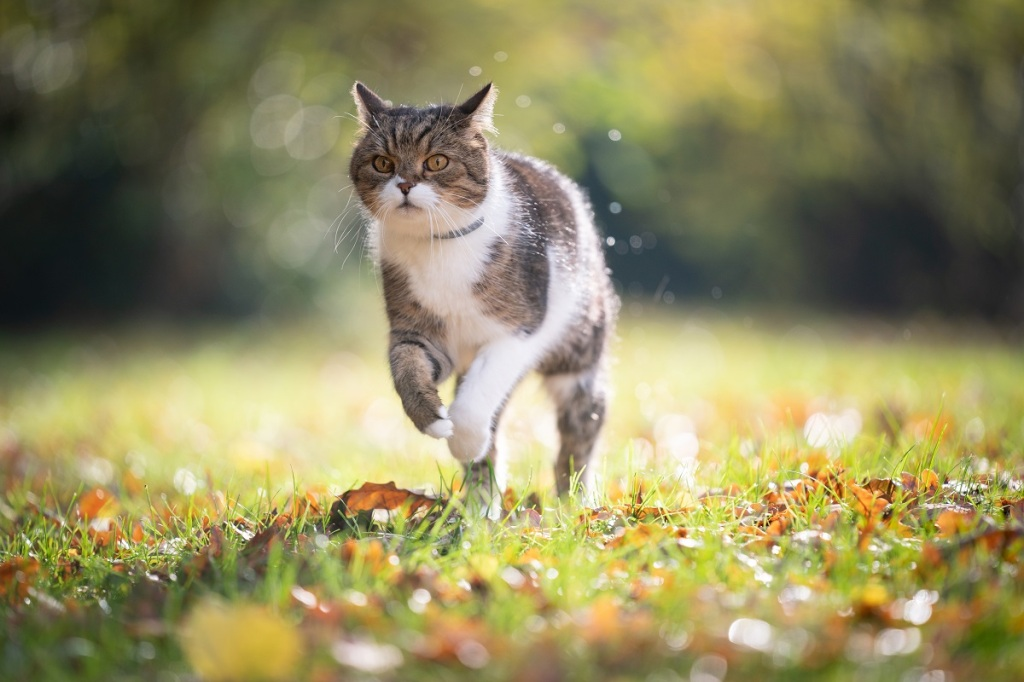 chat avec collier en extérieur