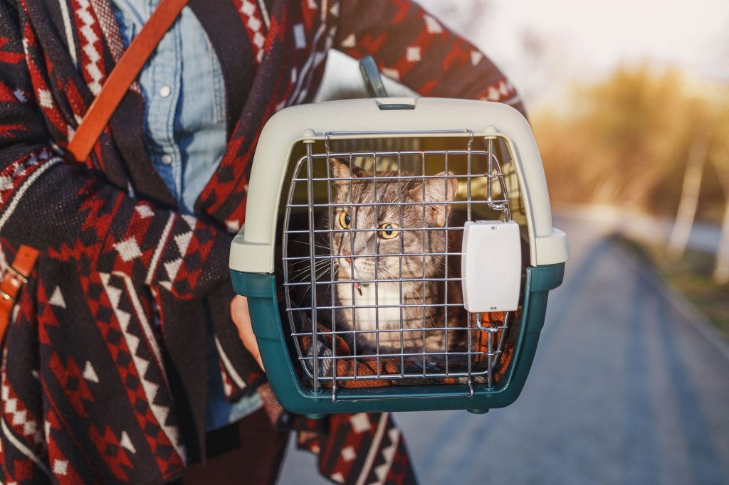 chat dans une caisse de transport