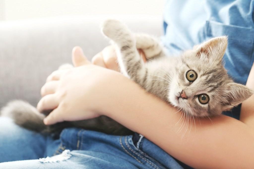 chaton dans les bras