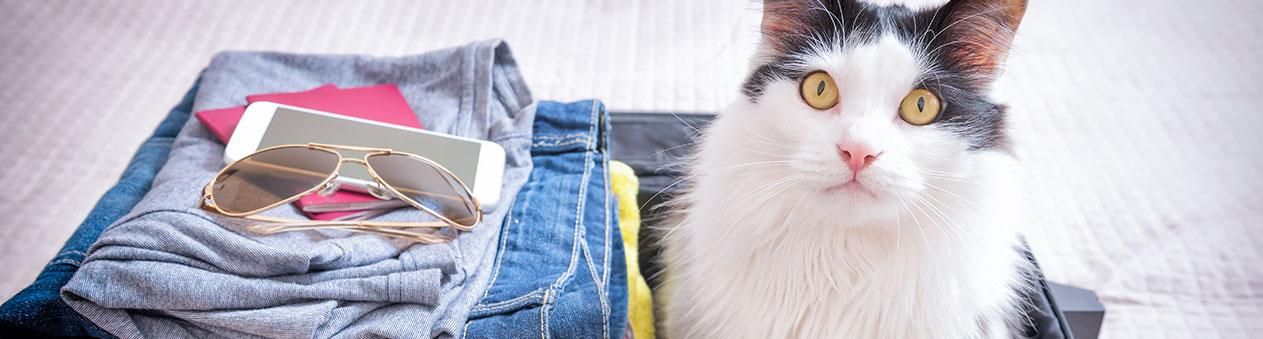 chat s'impose dans une valise
