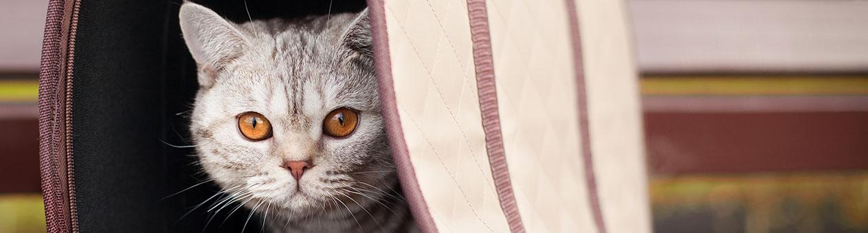 Chat dans un sac de transport
