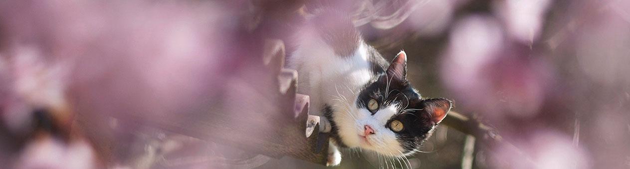 chat sur un toit
